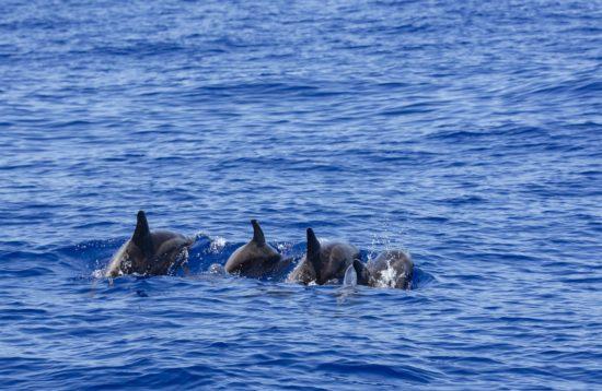 Passeio de barco com observação de golfinhos e outros cetáceos no estuário do Sado, Setúbal